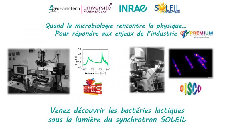 Les bactéries lactiques sous la lumière du synchrotron SOLEIL