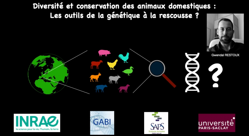 Diversité et conservation des animaux domestiques : Les outils de la génétique à la rescousse ?