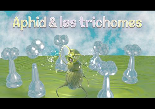 JEU : Aphid et les trichomes