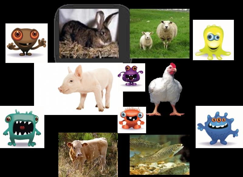 Les animaux d'élevage et leurs microbes : des alliés pour la santé